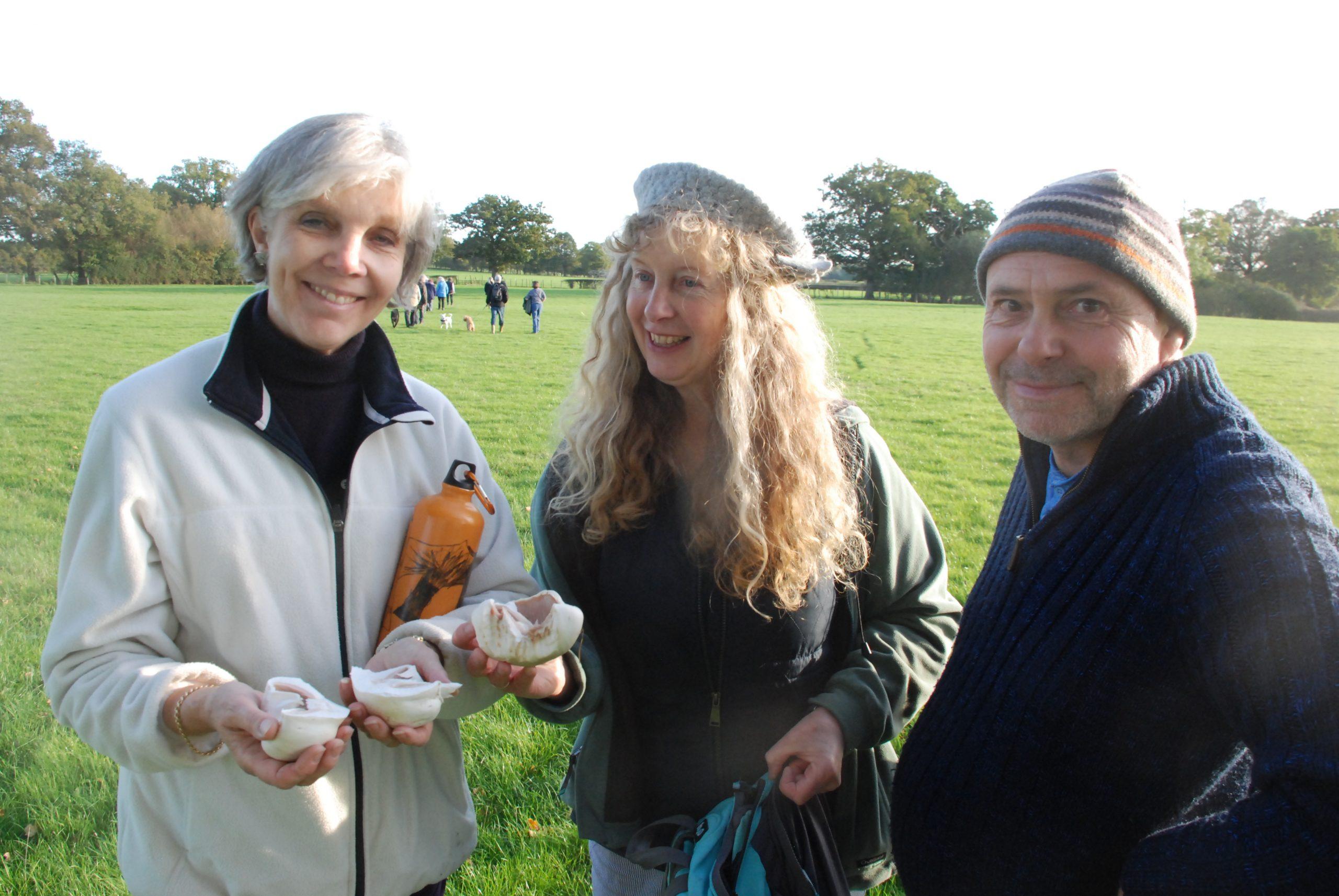 Mushrooms on Staplehurst walk