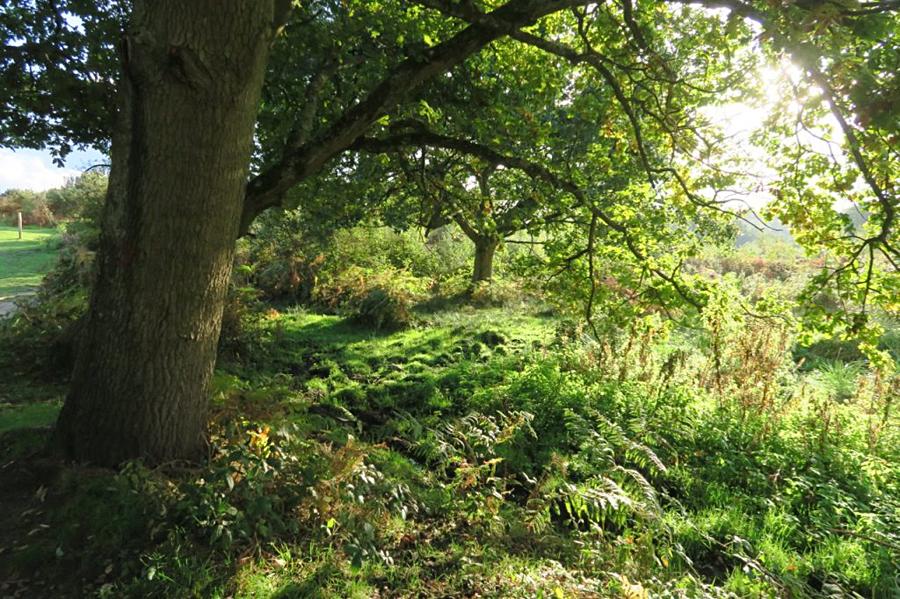 Hothfield Common, Kent
